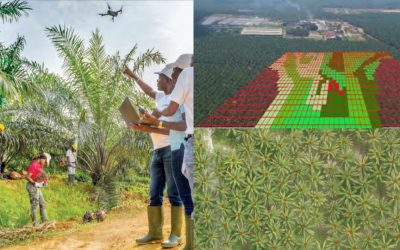 Reduce the need for manpower in your oil palm plantation with AI